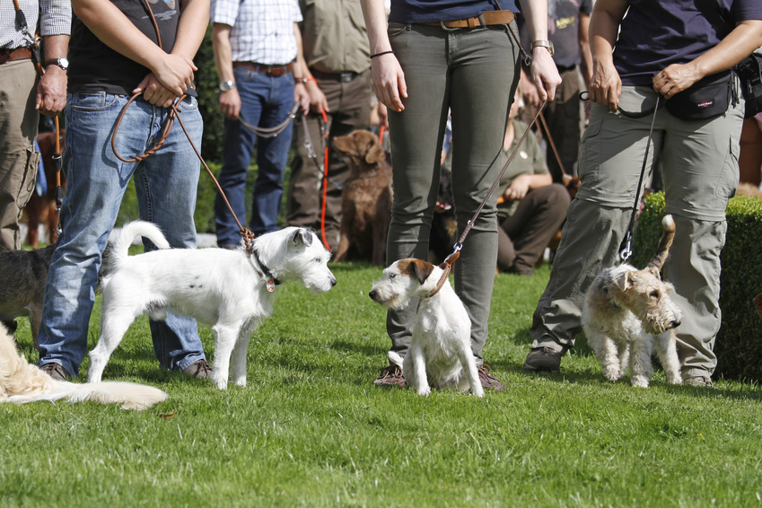 Hundeerziehung ohne Sprache