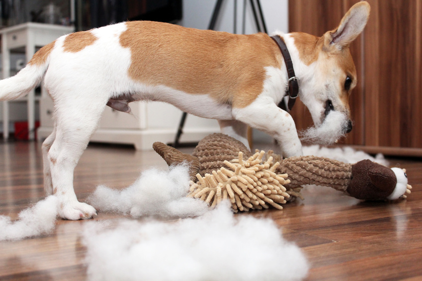 Hundespielzeug selbst gemacht