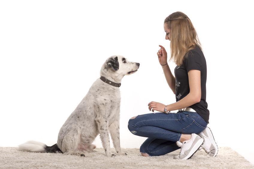 die wichtigsten Hundekommandos